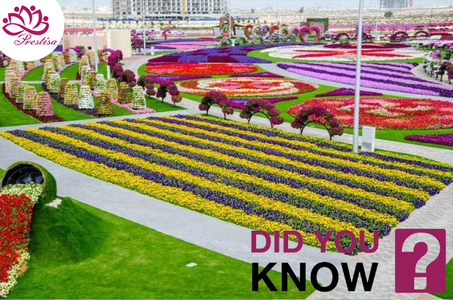 taman bunga terbesar dunia - dubai