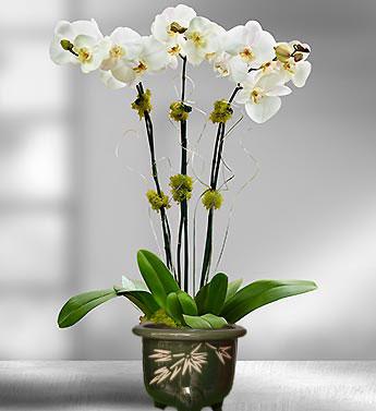 pesan bunga anggrek untuk hari ibu di serpong harga termurah dan terbaik