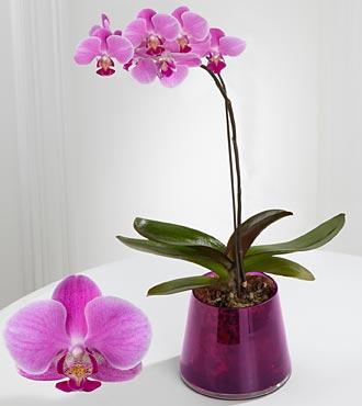 kirim bunga anggrek untuk hari ibu di tangerang - jual rangkaian bunga harga terjangkau di tangerang