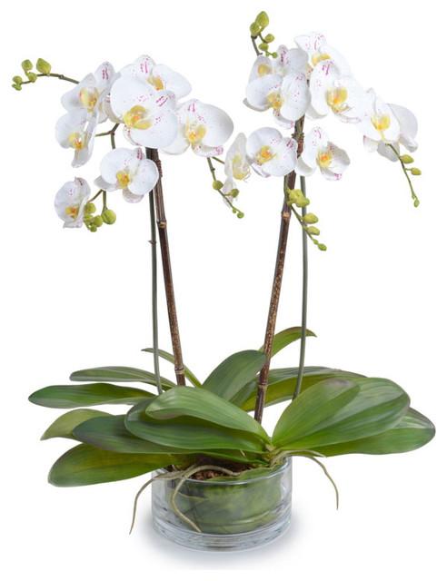 pesan bunga anggrek untuk hari ibu di bsd city tangerang- jual bunga meja anggrek harga termurah dan terbaik di tangerang