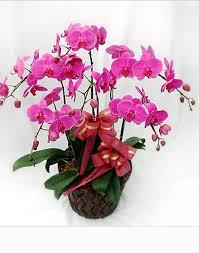 Jual Bunga Meja Anggrek di Daerah Kelapa Gading