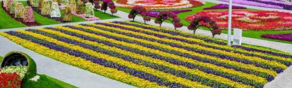 Dimana Taman Bunga Terbesar Di Dunia?