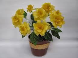 toko bunga kapuas kalimantan K KPS-05