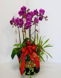 toko bunga barito k-brto-tmr-01